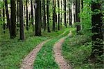 Path Through Forest, Hesse, Germany Stock Photo - Premium Royalty-Free, Artist: Michael Breuer, Code: 600-02833374