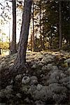 Lichen and Moss, Ontario, Canada Stock Photo - Premium Rights-Managed, Artist: Derek Shapton, Code: 700-02833452
