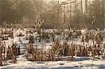 Schwenninger Moos in Winter, Baden-Wurttemberg, Germany Stock Photo - Premium Royalty-Free, Artist: Jochen Schlenker, Code: 600-02833531