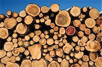 Stacked Logs Stock Photo - Premium Royalty-Freenull, Code: 600-02833536
