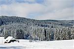 Black Forest in Winter, Near Schoenwald, Baden-Wuerttemberg, Germany