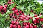 Close-up of Radishes at Farmer's Market Stock Photo - Premium Royalty-Free, Artist: Rick Fischer, Code: 600-02834024