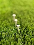 Golf Tees in Grass Stock Photo - Premium Rights-Managed, Artist: James Tse, Code: 700-02834019