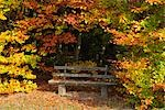 Park Bench in Forest, Odenwald, Hesse, Germany Stock Photo - Premium Royalty-Free, Artist: Raimund Linke, Code: 600-02860292