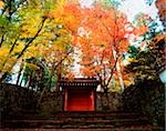 Japan, Ohara, Sanzen-in, Red gate and maple trees Stock Photo - Premium Rights-Managed, Artist: Asia Images, Code: 849-02864610