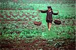 Vietnam, Hanoi, farmer walking through field Stock Photo - Premium Rights-Managed, Artist: Asia Images, Code: 849-02867386