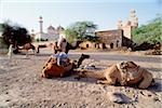 Pakistan, Punjab, Cohistan Desert, Men and camels resting outside Derawar Mosque. Stock Photo - Premium Rights-Managed, Artist: Asia Images, Code: 849-02867459