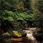 Rainforest, Ferns, River Stock Photo - Premium Royalty-Free, Artist: Koolstock, Code: 600-02885951