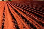 Ploughed Field Stock Photo - Premium Royalty-Free, Artist: Koolstock, Code: 600-02886126