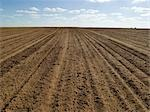 Ploughed Field Ready for Wheat Sowing, Australia Stock Photo - Premium Royalty-Free, Artist: Koolstock, Code: 600-02886656