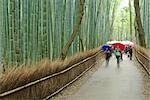 Bamboo Forest, Sagano, Arashiyama, Kyoto, Kyoto Prefecture, Kansai, Honshu, Japan Stock Photo - Premium Rights-Managed, Artist: Rudy Sulgan, Code: 700-02887257