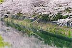 Cherry Blossoms, Kamo River, Kyoto, Kyoto Prefecture, Kansai, Honshu, Japan Stock Photo - Premium Rights-Managed, Artist: Rudy Sulgan, Code: 700-02887263