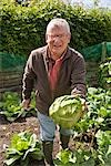 Man harvesting cabbage Stock Photo - Premium Rights-Managed, Artist: foodanddrinkphotos, Code: 824-02887721