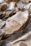 Oysters in their shells Stock Photo - Premium Rights-Managed, Artist: foodanddrinkphotos, Code: 824-02889032