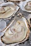Oysters in their shells Stock Photo - Premium Rights-Managed, Artist: foodanddrinkphotos, Code: 824-02889033
