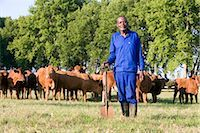 Farm worker stands with a spade in front of a herd of cattle, Midlands, KwaZulu Natal Province, South Africa Stock Photo - Premium Royalty-Freenull, Code: 682-02891878