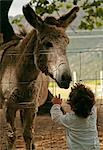 Young Boy Looking at a Donkey Stock Photo - Premium Royalty-Free, Artist: Gail Mooney, Code: 682-02893375