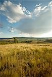 Scenic view of grass fields in the Natal Midlands. KwaZulu Natal Province, South Africa Stock Photo - Premium Royalty-Free, Artist: lernika                       , Code: 682-02895730