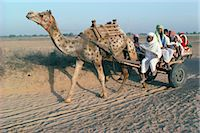 rajasthan camel - Riding in a camel cart, Jodhpur, Rajasthan state, India, Asia Stock Photo - Premium Rights-Managednull, Code: 841-02899272