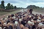 Shepherd herding sheep, Caspian, Iran (formerly Persia), Middle East Stock Photo - Premium Rights-Managed, Artist: Robert Harding Images, Code: 841-02901965