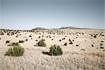 Marfa, Presidio County, West Texas, Texas, USA Stock Photo - Premium Royalty-Free, Artist: Mark Peter Drolet, Code: 600-02912063