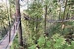 Capilano Suspension Bridge, Vancouver, British Columbia, Canada Stock Photo - Premium Rights-Managed, Artist: Christopher Gruver, Code: 700-02912183