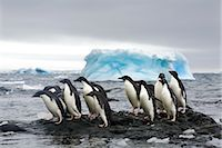Adelie Penguins, Antarctica Stock Photo - Premium Rights-Managednull, Code: 700-02912461