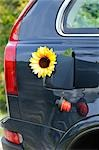 Sunflower in Car's Gas Tank Stock Photo - Premium Rights-Managed, Artist: Jean-Christophe Riou, Code: 700-02912535