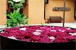 arranged flowers in a hotel, Thailand Stock Photo - Premium Rights-Managed, Artist: F1Online, Code: 853-02914267