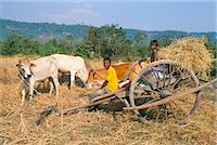 Farmer and son sitting on ox-cart, near Siem Reap, Cambodia, Indochina, Southeast Asia, Asia Stock Photo - Premium Rights-Managednull, Code: 841-02916482