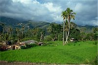 flores - Rice paddies in a rural landscape at Moni, Flores, Indonesia, Southeast Asia, Asia Stock Photo - Premium Rights-Managednull, Code: 841-02917585