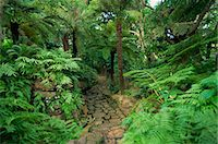 Tree ferns, Kirstenbosch Botanical Gardens, Cape Town, South Africa, Africa Stock Photo - Premium Rights-Managednull, Code: 841-02919736