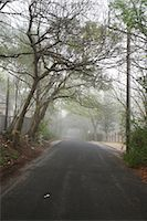 Tree-lined Street in the Morning                                                                                                                                                                         Stock Photo - Premium Rights-Managednull, Code: 700-02922842