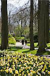 Spring daffodils at Keukenhof, park and gardens near Amsterdam, Netherlands, Europe