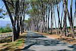Avenue of trees, Stellenbosch, South Africa Stock Photo - Premium Rights-Managed, Artist: Robert Harding Images, Code: 841-02925335
