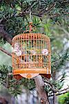 Caged bird, Yuen Po Street Bird Garden, Mong Kok, Kowloon, Hong Kong, China, Asia Stock Photo - Premium Rights-Managed, Artist: Robert Harding Images, Code: 841-02925383