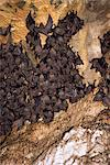 Bats at Goa Lawah, a temple, provide sustenance for legendary giant snake Naga Basuki, Bali, Indonesia, Southeast Asia, Asia Stock Photo - Premium Rights-Managed, Artist: Robert Harding Images, Code: 841-02925631