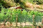 Chain-link fence in a field, Cinque Terre National Park, La Spezia, Liguria, Italy Stock Photo - Premium Royalty-Free, Artist: Glowimages, Code: 625-02927499