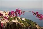 Close-up of flowers on a branch with a town in the background, Amalfi Coast, Maiori, Salerno, Campania, Italy Stock Photo - Premium Royalty-Free, Artist: Robert Harding Images, Code: 625-02927552