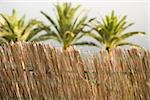 Close-up of fence with palm trees in the background, Amalfi Coast, Campania, Italy Stock Photo - Premium Royalty-Free, Artist: Philip Rostron, Code: 625-02928716