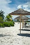 Tiki Umbrellas on the Beach, Turks and Caicos                                                                                                                                                            Stock Photo - Premium Rights-Managed, Artist: Arian Camilleri          , Code: 700-02935359