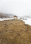 Abandoned RCMP Post and Post Office, Craig Harbour, Ellesmere Island, Nunavut, Canada                                                                                                                    Stock Photo - Premium Rights-Managed, Artist: J. David Andrews         , Code: 700-02943228