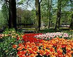 Tulips, Keukenhof Gardens, Lisse, Holland, Europe