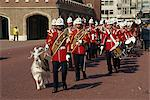 Royal Marine Band with goat mascot, London, England, United Kingdom, Europe                                                                                                                              Stock Photo - Premium Rights-Managed, Artist: Robert Harding Images, Code: 841-02944384