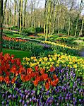 Flowering bulbs on display at the Keukenhof Gardens in Lisse, Holland, Europe