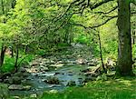 Afon Artro passing through natural oak wood, Llanbedr, Gwynedd, Wales, United Kingdom, Europe                                                                                                            Stock Photo - Premium Rights-Managed, Artist: Robert Harding Images, Code: 841-02946371