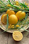 A plate of lemons and mimosa flowers                                                                                                                                                                     Stock Photo - Premium Rights-Managed, Artist: Robert Harding Images, Code: 841-02947001