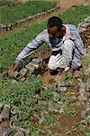 Plant nursery, Ziziga, Ethiopia, Africa