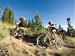 mountain bikers riding down a trail Stock Photo - Premium Royalty-Free, Artist: Cusp and Flirt, Code: 640-02952179