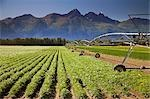 Large circle sprinker on bean field below Chugach Mountains Matanuska Valley near Palmer Alaska Summer                                                                                                   Stock Photo - Premium Rights-Managed, Artist: AlaskaStock              , Code: 854-02955540